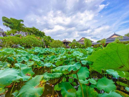 【惠州1天游】豐渚園、惠州西湖、花為你開