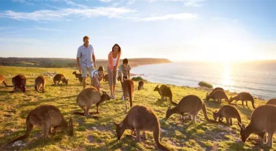【2020年寒假澳洲新西蘭親子游推薦 青島出發】(贈送WiFi)墨爾本·凱恩斯·黃金海岸·布里斯班·新西蘭·悉尼12日之旅
