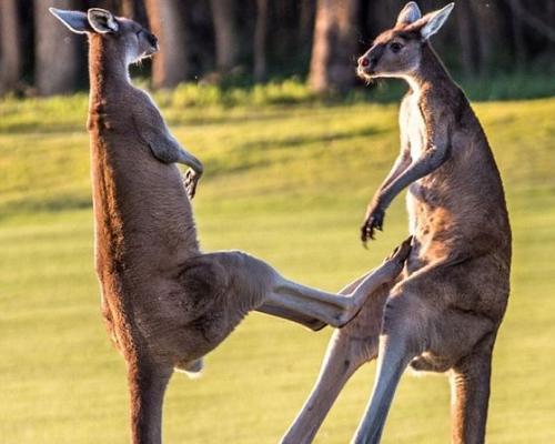 【寒假/春節青島去澳大利亞旅游 青島出發】(僅一站購物)悉尼+墨爾本+黃金海岸+布里斯班悅享澳洲8日游