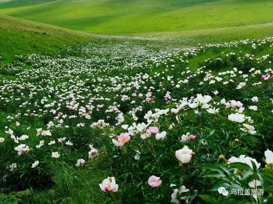 2021年天邊的草原——烏拉蓋草原、布林泉、九曲灣、兵團小鎮、野狼谷雙飛五日游