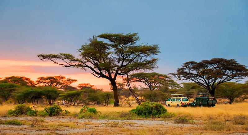 2020年肯尼亚动物大迁徙精品摄影团